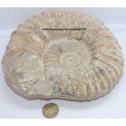 Ammonite Fossile 2,65kg