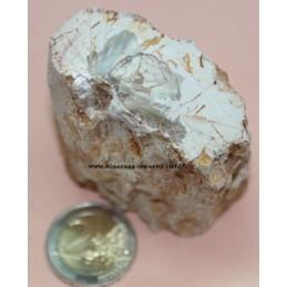 Bois Fossile pétrifié 175g