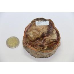 Tranche de bois fossile pétrifié