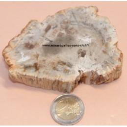 tranche-de-bois fossiles-et-pétrifié-brute-poli